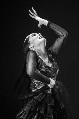 fotografía de flamenco