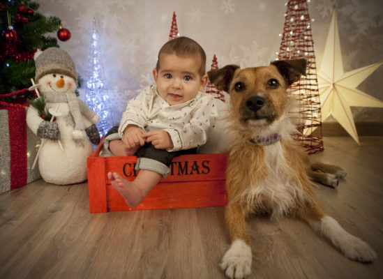 sesiones fotográficas de navidad
